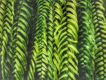 Όμορφα πράσινα φύλλα φτερών στο σκοτεινό ελαφρύ υπόβαθρο στοκ φωτογραφίες