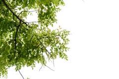 όμορφα πράσινα φύλλα στοκ φωτογραφία