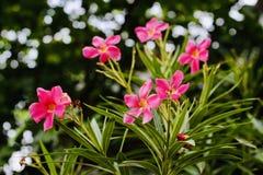 Όμορφα ρόδινα λουλούδια στην κοιλάδα στοκ εικόνες