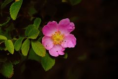 Όμορφα ρόδινα λουλούδια στο πάρκο στοκ εικόνα