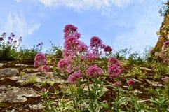 Όμορφα ρόδινα λουλούδια whith ο ουρανός στοκ φωτογραφία