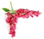 Όμορφα ρόδινα τροπικά λουλούδια σύνθεσης Στοκ Εικόνα