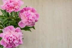 Όμορφα ρόδινα peonies για την ημέρα μητέρων ` s Στοκ Φωτογραφίες