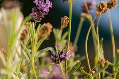 Όμορφα ρόδινα λουλούδια στοκ εικόνες με δικαίωμα ελεύθερης χρήσης