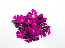 Όμορφα ρόδινα λουλούδια στοκ εικόνες