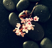 Όμορφα ρόδινα λουλούδια SPA στις καυτές πέτρες SPA στο νερό υγρό Backgr Στοκ εικόνα με δικαίωμα ελεύθερης χρήσης