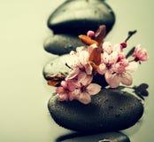 Όμορφα ρόδινα λουλούδια SPA στις καυτές πέτρες SPA στο νερό υγρό Backgr Στοκ εικόνες με δικαίωμα ελεύθερης χρήσης