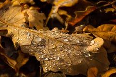 Όμορφα σημεία υποβάθρου φθινοπώρου σε ένα φύλλο Aguilar de Campoo στοκ φωτογραφία με δικαίωμα ελεύθερης χρήσης