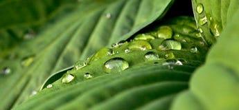 Όμορφα σταγονίδια στο πράσινο φύλλο στοκ εικόνες με δικαίωμα ελεύθερης χρήσης