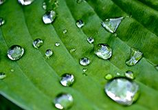 Όμορφα σταγονίδια στο όμορφο πράσινο φύλλο στοκ φωτογραφία με δικαίωμα ελεύθερης χρήσης