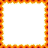 Όμορφα σύνορα λουλουδιών Στοκ Φωτογραφίες