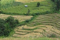 Όμορφα τοπίο και αγρόκτημα στοκ εικόνες