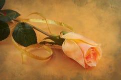 όμορφα τριαντάφυλλα Στοκ φωτογραφία με δικαίωμα ελεύθερης χρήσης