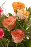 όμορφα τριαντάφυλλα στοκ εικόνα