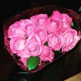 όμορφα τριαντάφυλλα Στοκ Φωτογραφίες