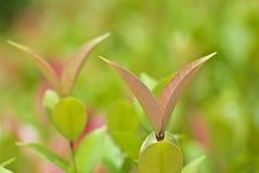 όμορφα φρέσκα φύλλα Στοκ φωτογραφίες με δικαίωμα ελεύθερης χρήσης