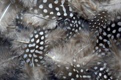 όμορφα φτερά Στοκ εικόνες με δικαίωμα ελεύθερης χρήσης
