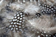 όμορφα φτερά Στοκ εικόνα με δικαίωμα ελεύθερης χρήσης