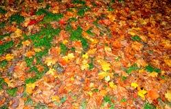 Όμορφα φωτεινά χρωματισμένα πεσμένα φύλλα Στοκ εικόνα με δικαίωμα ελεύθερης χρήσης