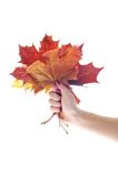 όμορφα φύλλα εκμετάλλε&upsilon Στοκ φωτογραφία με δικαίωμα ελεύθερης χρήσης