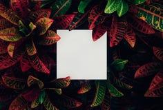 Όμορφα φύλλα με το άσπρο διαστημικό υπόβαθρο αντιγράφων στον κήπο σχέδιο εννοιών φύσης Για την παρουσίαση στοκ εικόνες