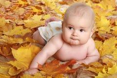 όμορφα φύλλα παιδιών φθινο& στοκ φωτογραφία με δικαίωμα ελεύθερης χρήσης