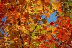 όμορφα φύλλα πτώσης Στοκ Εικόνες