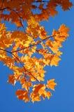όμορφα φύλλα πτώσης Στοκ φωτογραφία με δικαίωμα ελεύθερης χρήσης