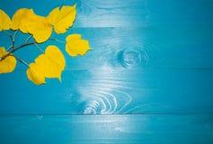 Όμορφα φύλλα σφενδάμου στο εκλεκτής ποιότητας ξύλινο σχέδιο συνόρων υποβάθρου εκλεκτής ποιότητας τόνος χρώματος - έννοια των φύλλ Στοκ φωτογραφία με δικαίωμα ελεύθερης χρήσης