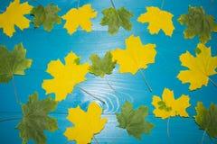 Όμορφα φύλλα σφενδάμου στο εκλεκτής ποιότητας ξύλινο σχέδιο συνόρων υποβάθρου εκλεκτής ποιότητας τόνος χρώματος - έννοια των φύλλ Στοκ Εικόνες