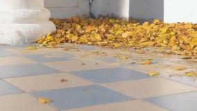 Όμορφα φύλλα φθινοπώρου στη βεράντα του σπιτιού με μια στήλη στο ναυπηγείο απόθεμα βίντεο