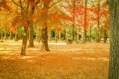 Όμορφα φύλλα φθινοπώρου της Ιαπωνίας στο πάρκο Meiji Jingu Gaien του Τόκιο στοκ εικόνες