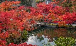 Όμορφα φύλλα χρώματος φθινοπώρου στο Κιότο Στοκ φωτογραφία με δικαίωμα ελεύθερης χρήσης