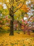 Όμορφα φύλλα χρώματος φθινοπώρου στο ναό Eikando Στοκ εικόνα με δικαίωμα ελεύθερης χρήσης