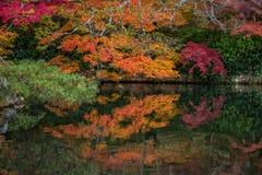 Όμορφα φύλλα χρώματος φθινοπώρου στο ναό Eikando Στοκ Εικόνα