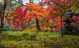 Όμορφα φύλλα χρώματος φθινοπώρου στο ναό Eikando Στοκ Φωτογραφία