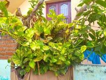 Όμορφα φύλλα στοκ εικόνα με δικαίωμα ελεύθερης χρήσης