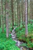 Όμορφα φύση και ρεύματα Στοκ Φωτογραφία