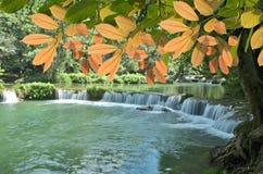 Όμορφα φύλλα και όμορφος καταρράκτης Στοκ εικόνα με δικαίωμα ελεύθερης χρήσης