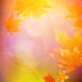 Όμορφα φύλλα φθινοπώρου διανυσματική απεικόνιση