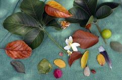 όμορφα φύλλα Στοκ φωτογραφία με δικαίωμα ελεύθερης χρήσης