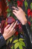 Όμορφα χέρια που κρατούν και που αγκαλιάζουν τις ζωηρόχρωμες αμπέλους φθινοπώρου στοκ φωτογραφίες με δικαίωμα ελεύθερης χρήσης