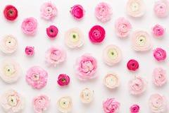 Όμορφα χρωματισμένα λουλούδια βατραχίων σε ένα άσπρο υπόβαθρο Ευχετήρια κάρτα άνοιξη στοκ εικόνα με δικαίωμα ελεύθερης χρήσης