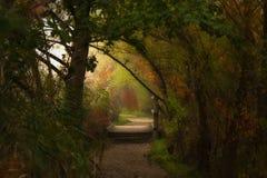 Όμορφα χρώματα στο δάσος στοκ εικόνες
