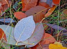 όμορφα χρώματα φθινοπώρου στοκ εικόνα με δικαίωμα ελεύθερης χρήσης