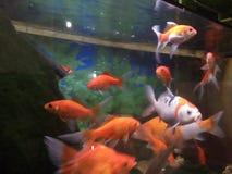 όμορφα ψάρια στοκ φωτογραφία με δικαίωμα ελεύθερης χρήσης