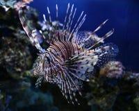 Όμορφα ψάρια Στοκ Εικόνα