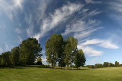 όμορφα δέντρα τοπίων λιβαδ&io Στοκ Εικόνα