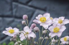 Όμορφα anemones σε ένα θερινό λιβάδι Στοκ φωτογραφία με δικαίωμα ελεύθερης χρήσης