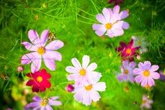 όμορφα floral λουλούδια σχε&delt στοκ φωτογραφία με δικαίωμα ελεύθερης χρήσης